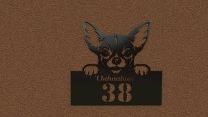chihuahua_festett